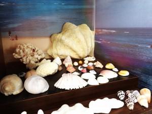 貝殻0612
